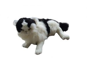 Weighted cat