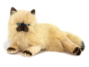 Bocchetta Violet the Himalayan Cat 38cm